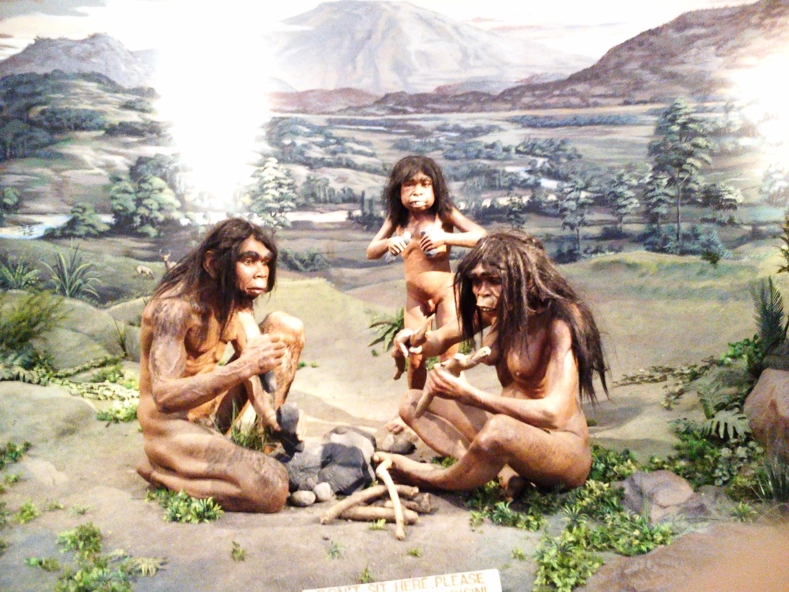 Familie de erectus